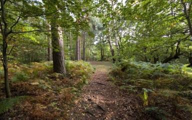woodland-scene
