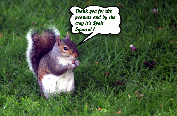 squirrel 3 cropped with speech bubble