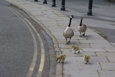 Mum, Dad and babies