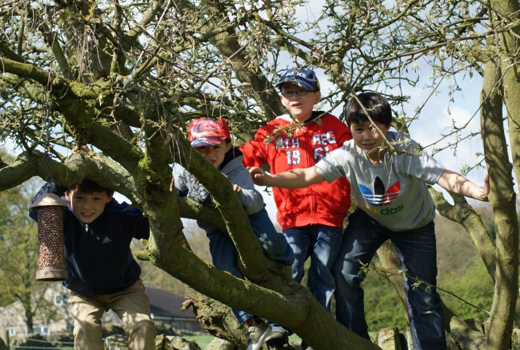 NG boys up the tree