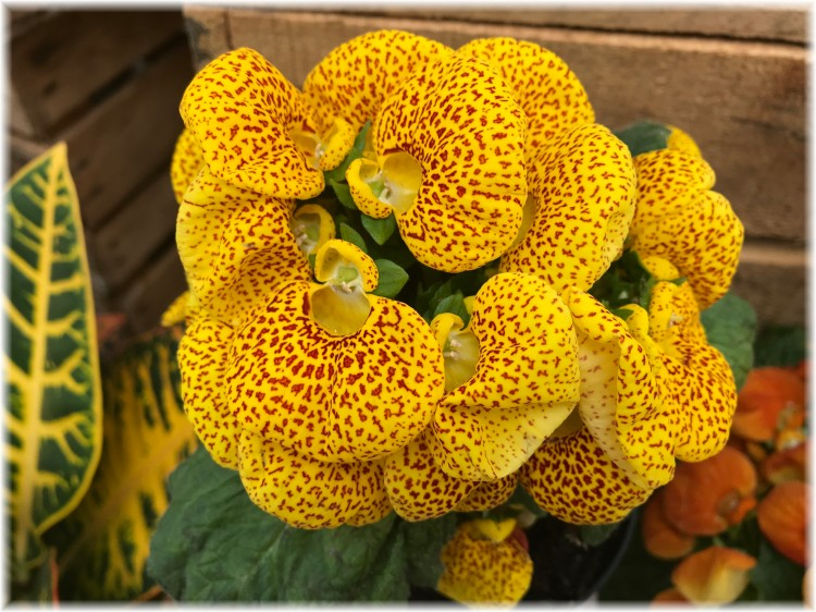 2nd Flower 1
