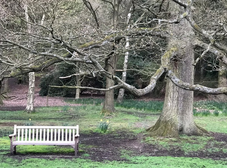 A straight bench beneth the curved lines of the branches
