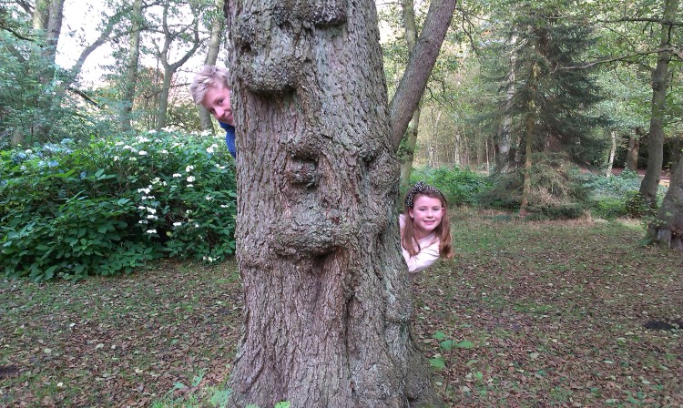 The faces of the tree