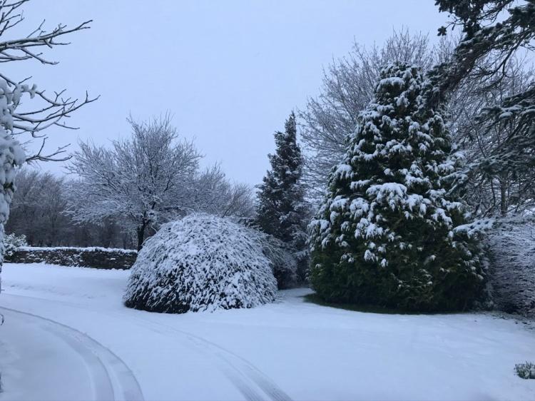 A Snow Morning