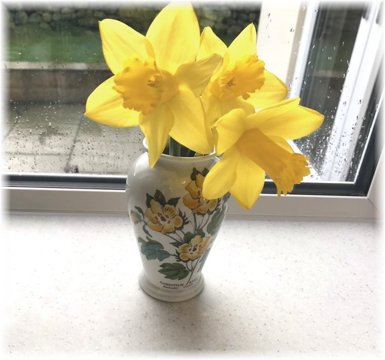 Daffodils for the kitchen 2