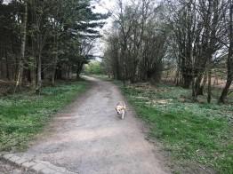 woodland walk 3